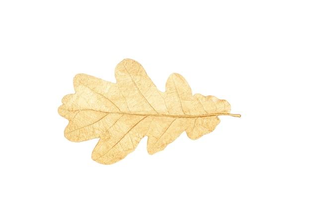 Złoty liść na białym tle