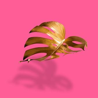 Złoty liść tropikalnej palmy monstera na pastelowym luksusowym różu