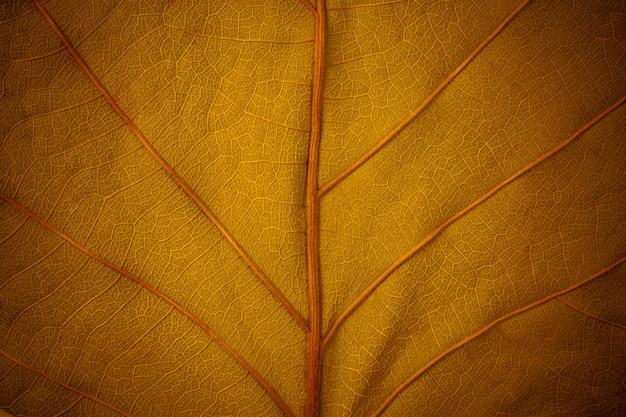 Złoty liść w tle