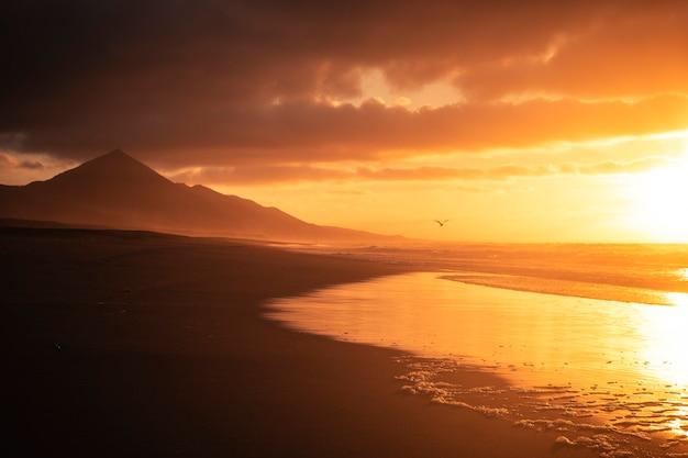 Złoty piękny czerwony zachód słońca na plaży z mewą latającą w poszukiwaniu wolności i koncepcji wakacji nikt w tropikalnym dzikim malowniczym miejscu z oceanem i górami cichy i spokojny krajobraz latem