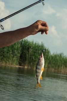 Złowione ryby na żyłce przed rzeką.