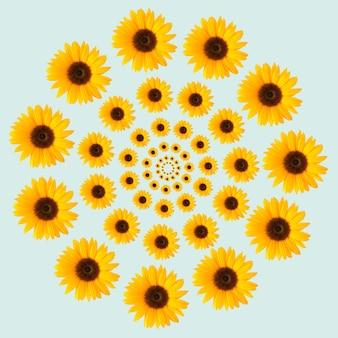 Złudzenie optyczne słonecznik wzór koło na niebieskim tle. koncepcja kwiat wiosna lato.
