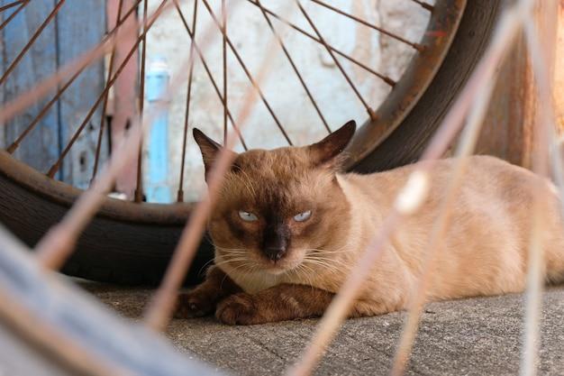 Zły kot z nieszczęśliwym bliska