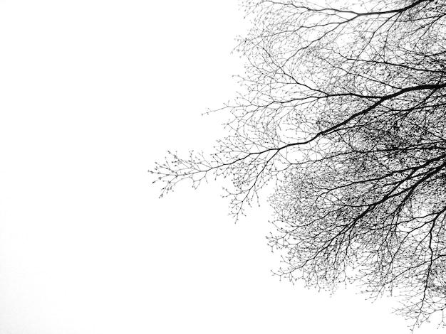 Zmarł drzewo i gałęzie z białym tłem