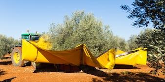 Zmechanizowany zbiór oliwek
