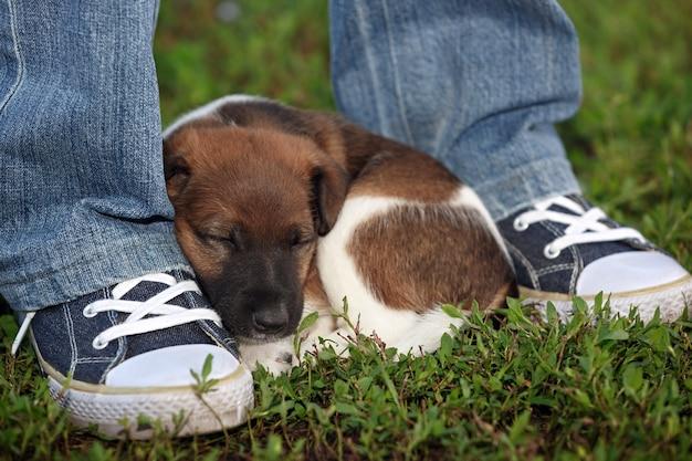 Zmęczony szczeniak odpoczywa w pobliżu stóp mężczyzny