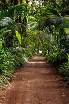 Zmielona wiejska droga po środku tropikalnej dżungli drogi