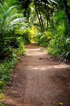 Zmielona wiejska droga pośrodku tropikalnej dżungli