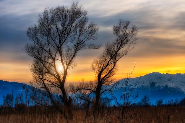 Zmierzch między drzewami w tło śnieżnych górach