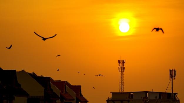 Zmierzch nad anteną na budynku dachu z latającym ptakiem.