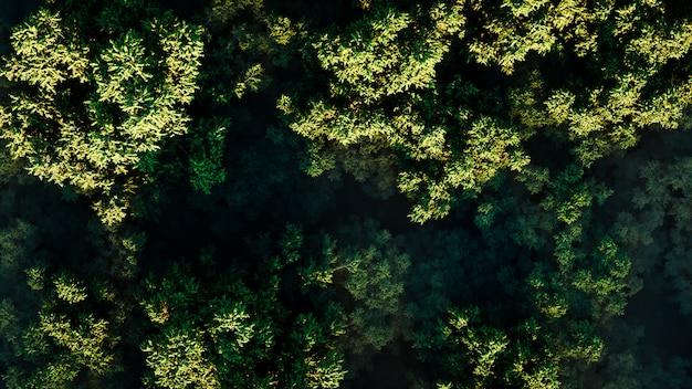 Zmierzch nad gęstym zielonym lasem w mgle na słonecznym dniu