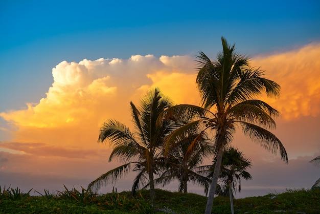Zmierzchu nieba kokosowi drzewka palmowe w karaiby