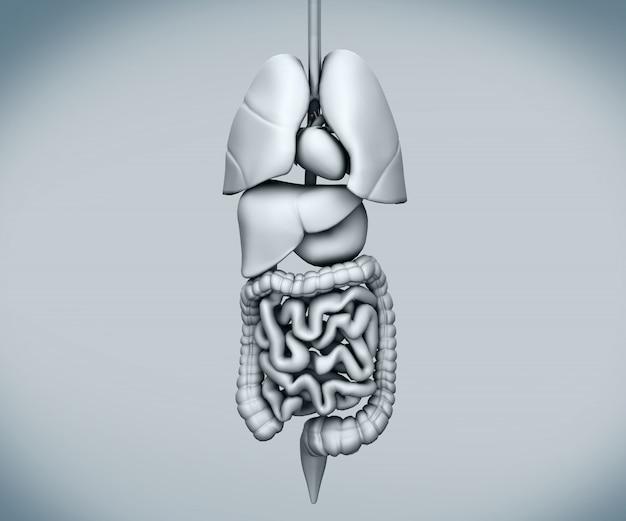 Zmontowane narządy ludzkie