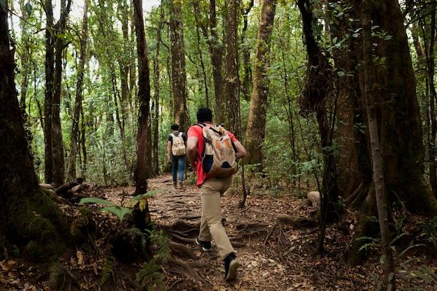 Znajomi wędrówki w lesie