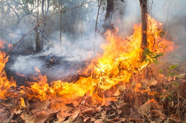 Zniszczony przez płonący las tropikalny w tajlandii