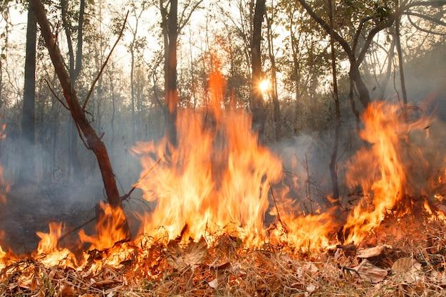 Zniszczony przez płonący las tropikalny