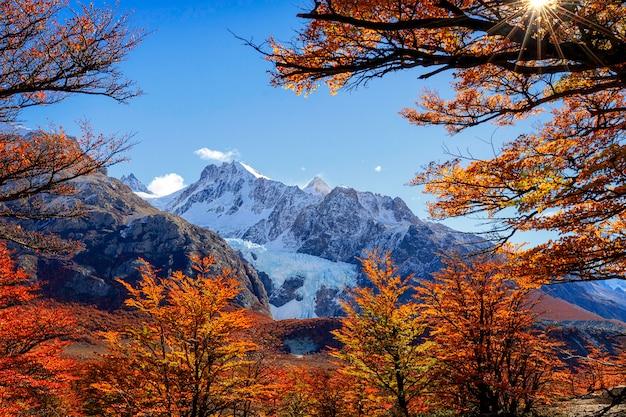 Zobacz na glaciar piedras blancas przez czerwone bukowe drzewa. park narodowy los glaciares. el chalten. patagonia. argentyna
