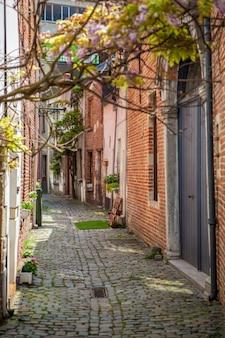 Zobacz starą ulicę z drzewami w brukseli, belgia