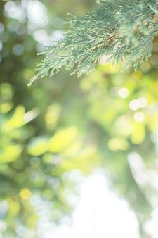 Zobacz szczegółowe zbliżenie zielona natura i naturalne światło słoneczne. na rozmytym tle jest