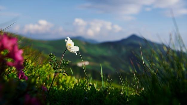 Zogniskowane zdjęcie. zamknij widok trawy w górach w słoneczny dzień.