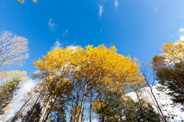 Żółknięcie liści jesienią