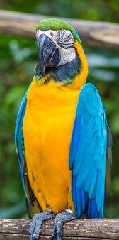 Żółta ara w zoo