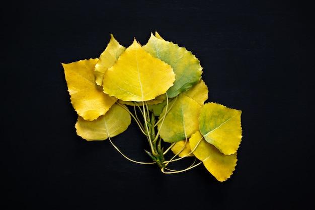 Żółta gałąź liści topoli