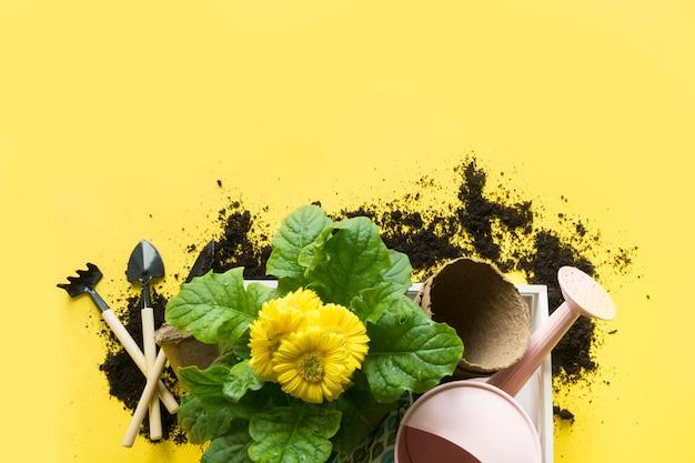 Żółta gerbera, kwiaty w doniczce, opłaty za ogrodnictwo na żółto. skopiuj miejsce