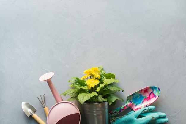 Żółta gerbera, kwiaty w doniczce, opłaty za ogrodnictwo. skopiuj miejsce