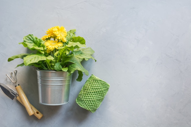 Żółta jasna gerbera, opłaty za prace ogrodnicze.