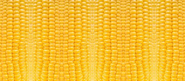 Żółta kukurydza wzór natury, abstrakcyjne tło z teksturą warzyw