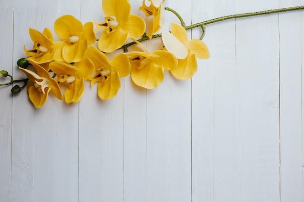 Żółta orchidea na białym drewnie