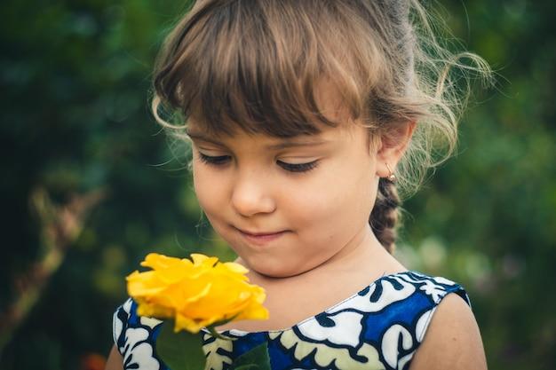 Żółta róża młody ogrodnik