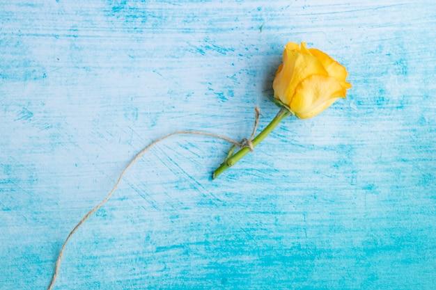 Żółta róża przewiązana liną