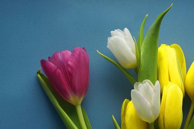 Żółte białe różowe tulipany na niebieskim tle