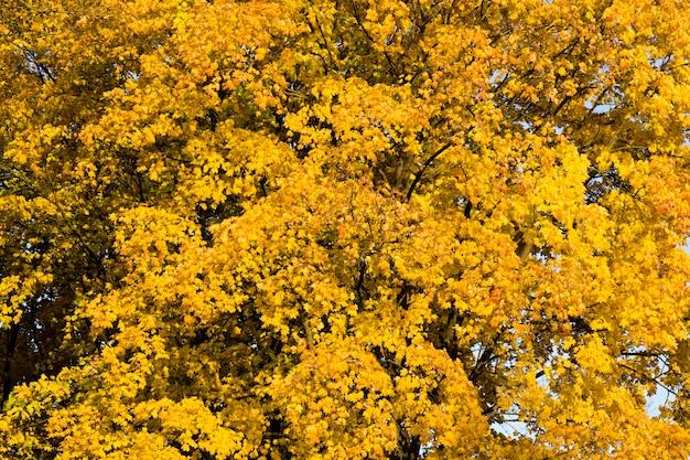 Żółte drzewa w parku
