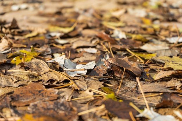 Żółte i brązowe liście na ziemi jesienią