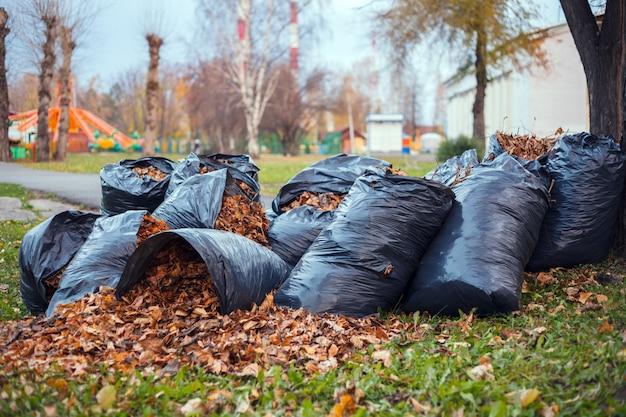 Żółte i brązowe liście zbierane są w kilku czarnych plastikowych workach na śmieci i rozrzucone na zielonej trawie stojącej pod drzewem w parku miejskim. pojęcie jesień w miasto ogródzie czyści miasto