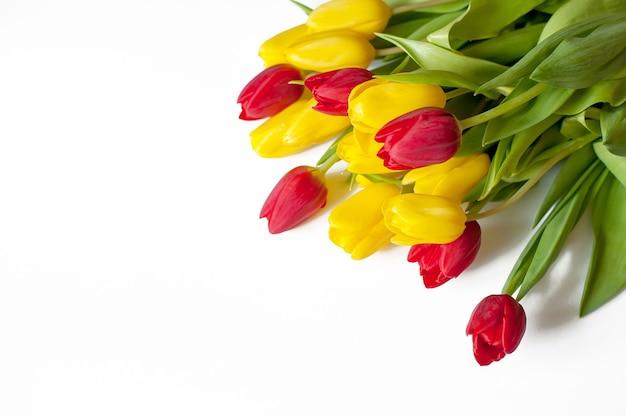 Żółte i czerwone tulipany na białym tle z miejsca na kopię