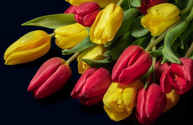 Żółte i czerwone tulipany z kroplami rosy na ciemnym tle