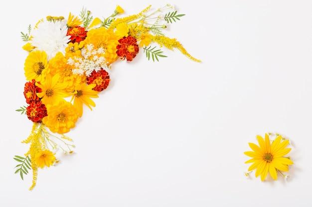 Żółte i pomarańczowe kwiaty na białym tle z copyspace
