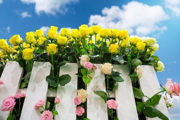 Żółte i różowe róże za ogrodzeniem na zewnątrz