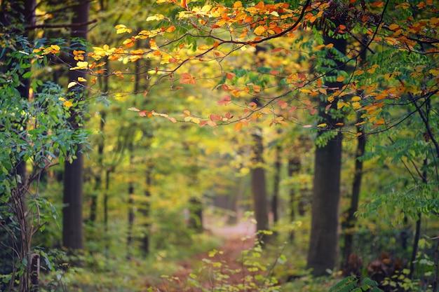 Żółte i zielone drzewa