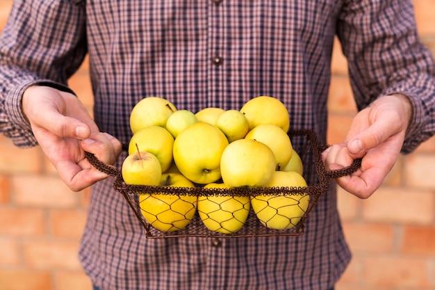 Żółte jabłka w koszu w męskich rękach. jesienne zbiory jabłek na żywność
