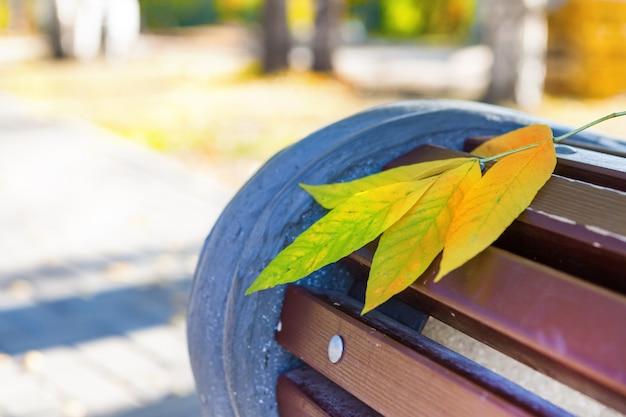 Żółte jesienne liście i drzewa w parku na ławce