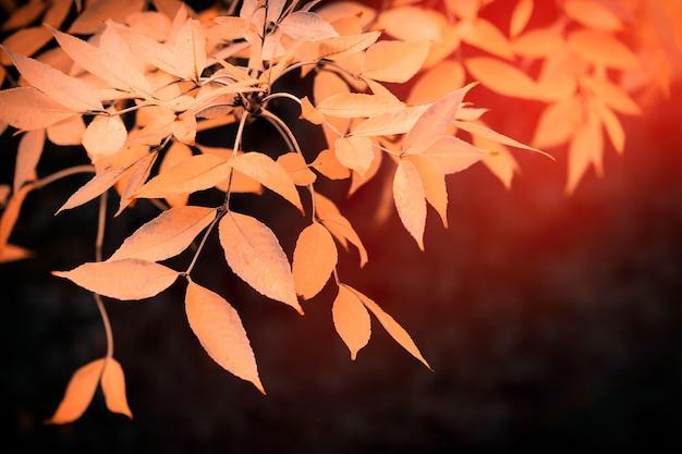 Żółte jesienne liście na gałęzi