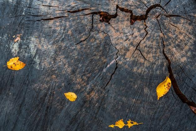 Żółte jesienne liście na pniu drzewa
