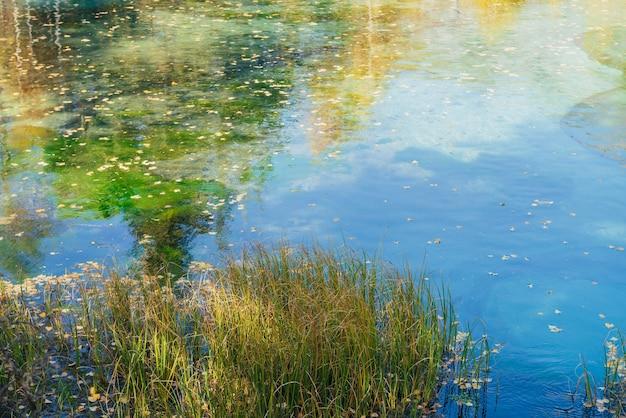 Żółte jesienne liście na powierzchni czystej wody górskiego jeziora z odbiciem złotych drzew w słońcu. jasny charakter tła turkusowego jeziora w jesiennych kolorach. piękne jezioro jesienią.