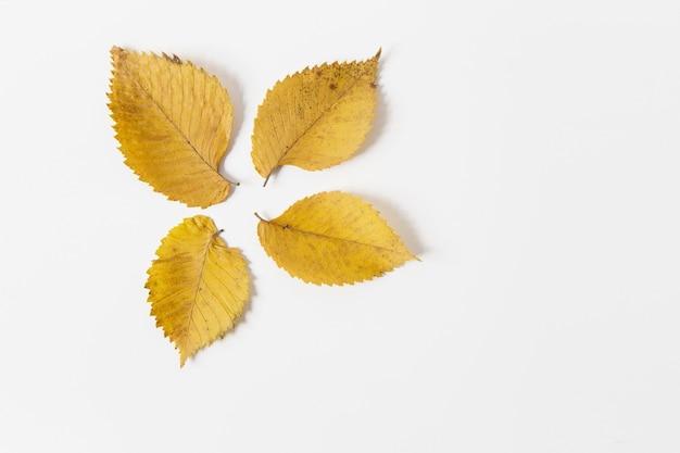 Żółte jesienne liście. płaskie lay. miejsce dla tekstu. makijaż dla projektu. białe tło. kreatywny układ