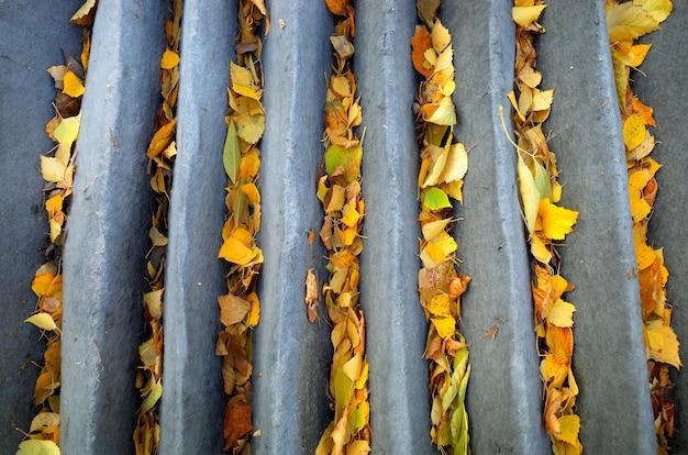 Żółte jesienne liście wewnątrz asfaltowych szczelin w tle